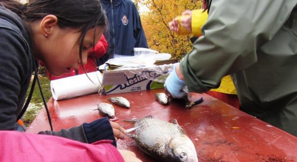 Fish Camp 2012 in Wek'weeti. Photo Credit: Karin Clark, WRRB