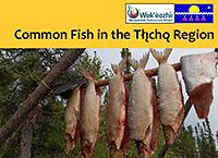 Tlicho Fish Guide 2016