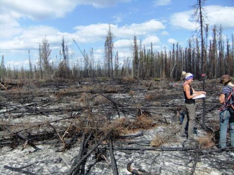 Taking residual forest structure measurements to estimate pre-fire conditions and above ground fire severity (Photo: Xanthe Walker, University of Saskatchewan)