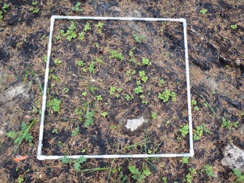 Vegetation quadrat  (Photo: Xanthe Walker, University of Saskatchewan)