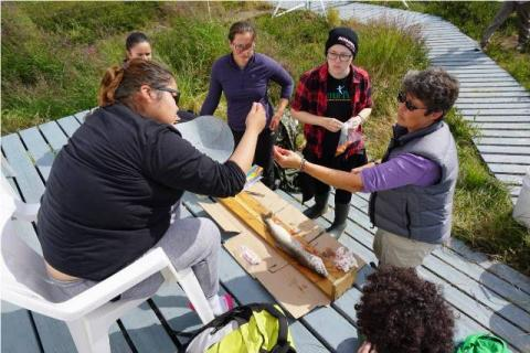 TSSRAP student Allison Wetrade learning fish anatomy with Tasha Stephenson and Tundra Science and Culture Camp students.  Photo:  GNWT / K.Clark
